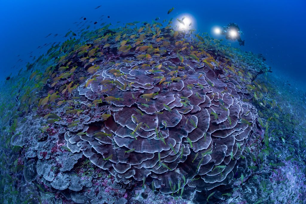 La PÇrouse Reef Laurent Ballesta Blancpain Ocean Commitment