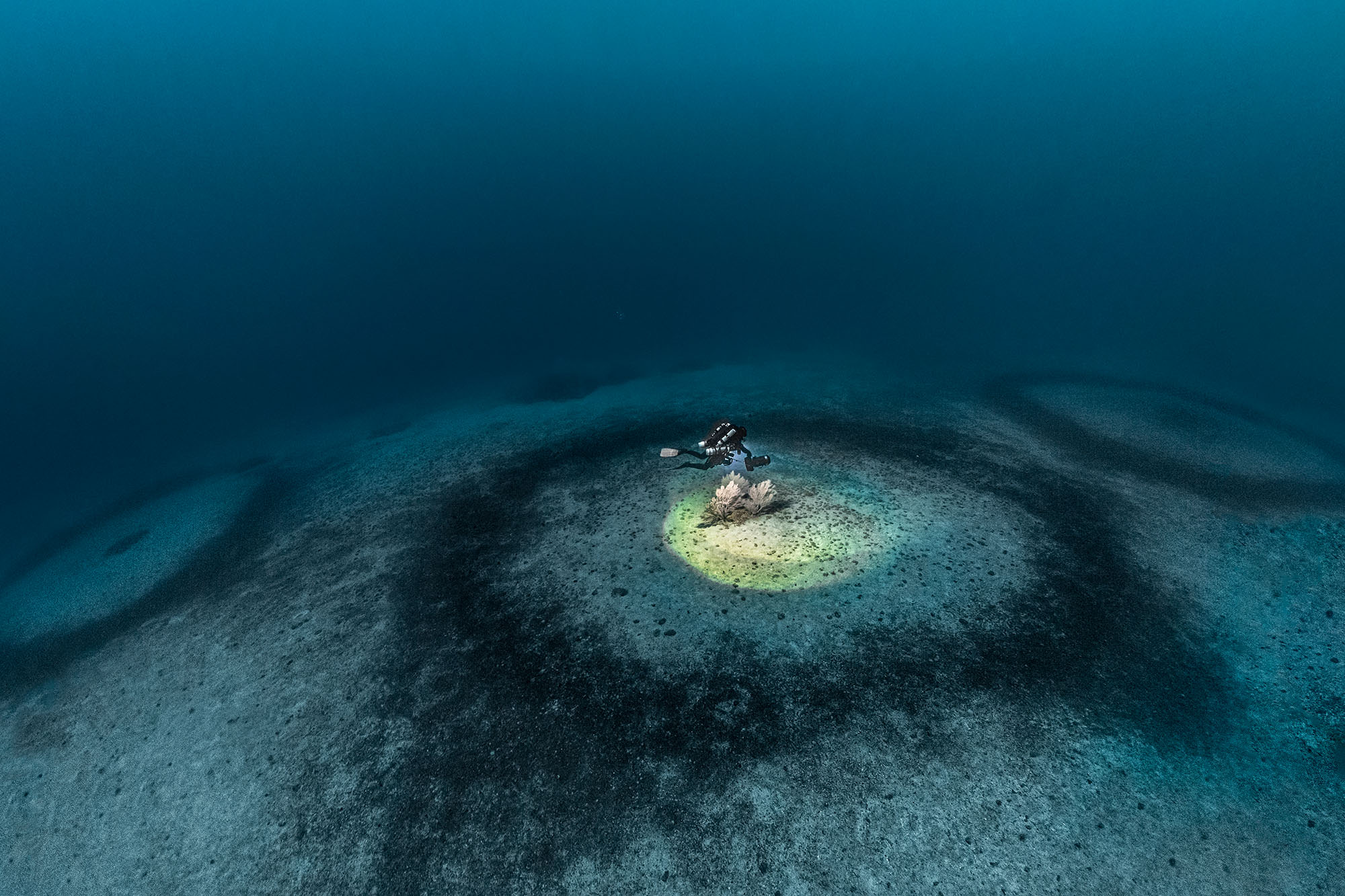 Mystery of coral rings